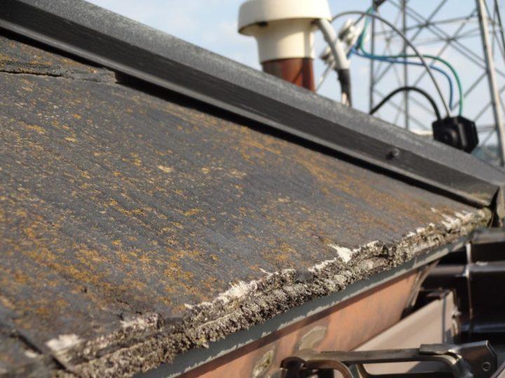岐阜市、各務原市、美濃加茂市、江南市、扶桑町で外壁塗装・屋根工事・屋根リフォームのことなら私たちフィールグッド岐阜 メダル写真feelgood(フィールグッド) 屋根のコケ