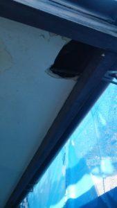 軒天井の補修